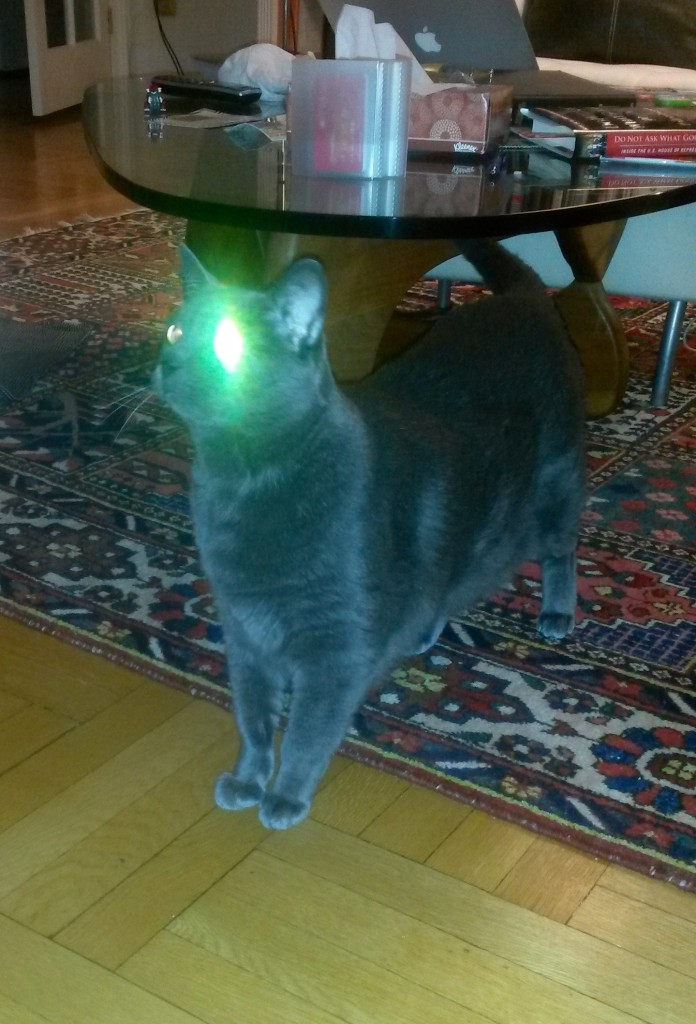 Cat with laser eye